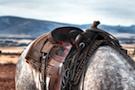 Equitation en Irlande
