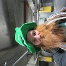 Parade de la Saint Patrick à Dublin