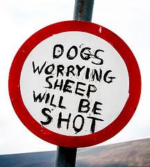 fusil pour chien