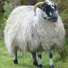 Souvenirs d'Irlande : des lainages